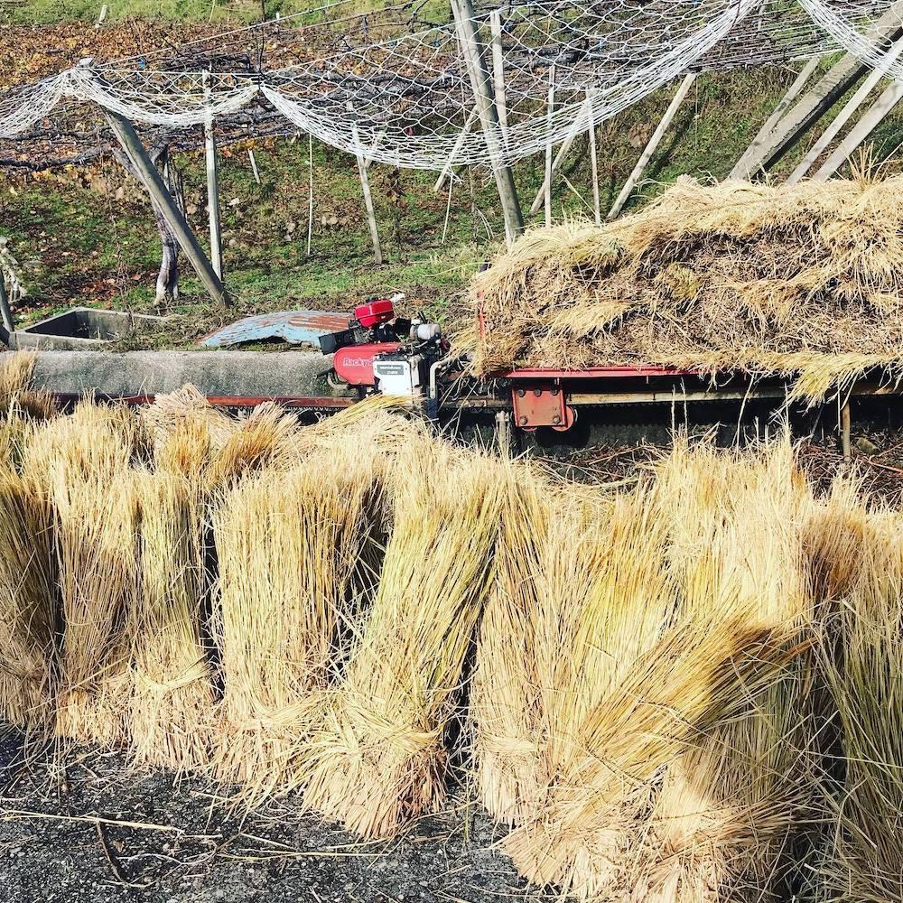 畑に敷く藁
